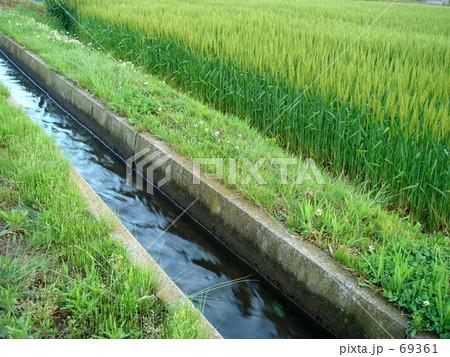 農業用水路と麦畑 69361  農業用水路と麦畑 画質確認   農業用水路と麦畑の写真素材 [6