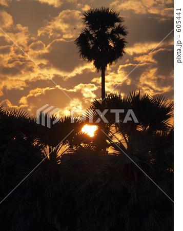 写真素材: ジャングルに沈む夕日