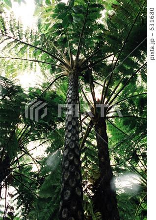 ヒカゲヘゴの画像 p1_37
