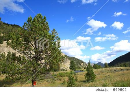 イエローストーン国立公園の画像 p1_31