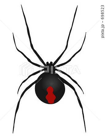 セアカゴケグモの画像 p1_16