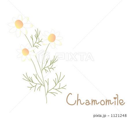 カモミールの画像 p1_24