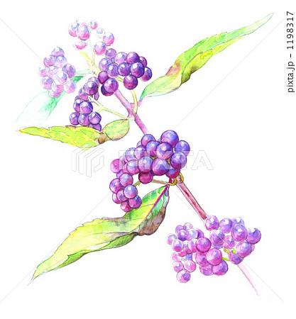 紫式部 花 類似