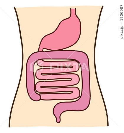 胃腸 1206987  胃腸 画質確認    胃腸のイラスト素材 [1206987]