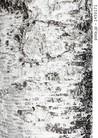 白樺の樹皮 1450171 白樺の樹皮の写真素材 [1450171] - PIXTA