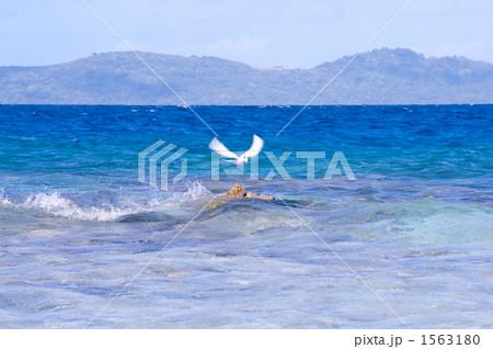 照片: 吉普岛 海洋 鸟儿