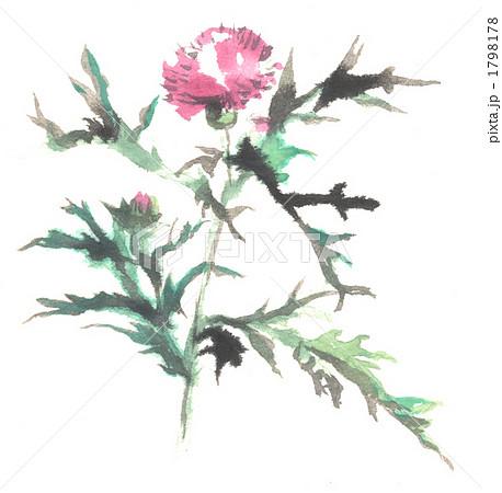 アザミの画像 p1_37