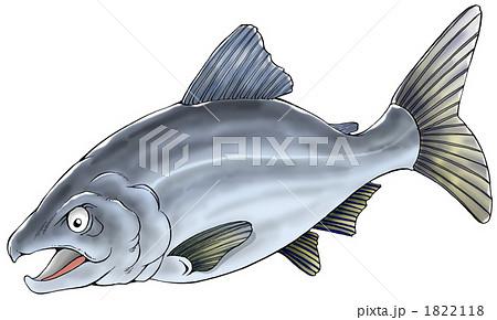 サケの画像 p1_30