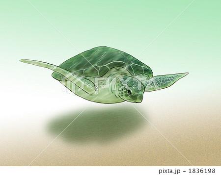 ウミガメの画像 p1_23