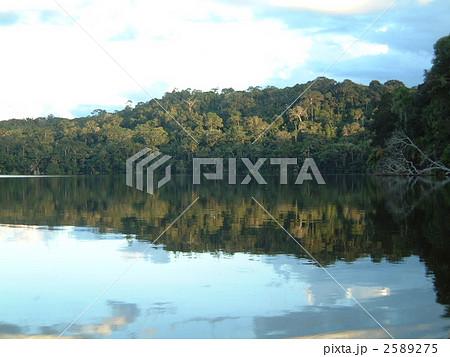 湖 森林 原生林 ジャングル