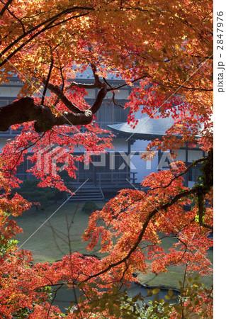もみじ 紅葉 寺社の写真  サムネイル表示に戻す  もみじ 紅葉 寺社の写真素材 [284797