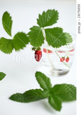 野苺 ワイルドベリー 野いちご  野苺 ワイルドベリー 野いちご ワイルドベリー 野いちご 野苺