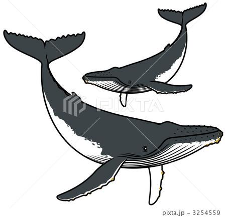 ザトウクジラの画像 p1_21