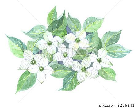 ヤマボウシの画像 p1_27