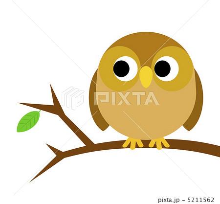 フクロウの画像 p1_3