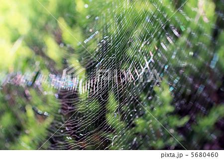 蜘蛛の巣 5680460  蜘蛛の巣  サムネイル表示に戻す 画質を確認 蜘蛛の巣の写真素材 [
