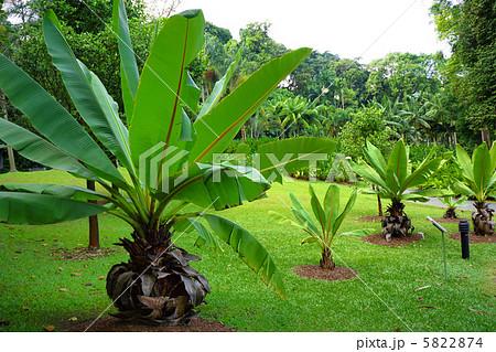 シンガポール植物園の画像 p1_7