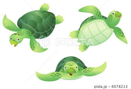 ウミガメの画像 p1_6