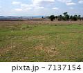 マールバラ付近の草原