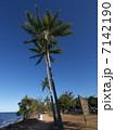 オーストラリア・ルシンダのボレロパークのヤシの木