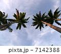 オーストラリア・ルシンダのヤシの木
