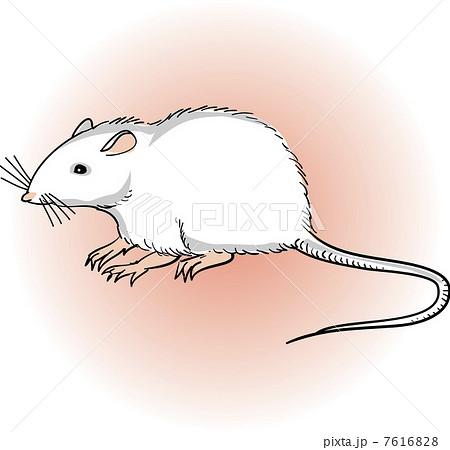 ハツカネズミの画像 p1_30