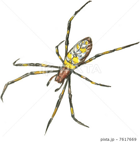 ジョロウグモの画像 p1_16