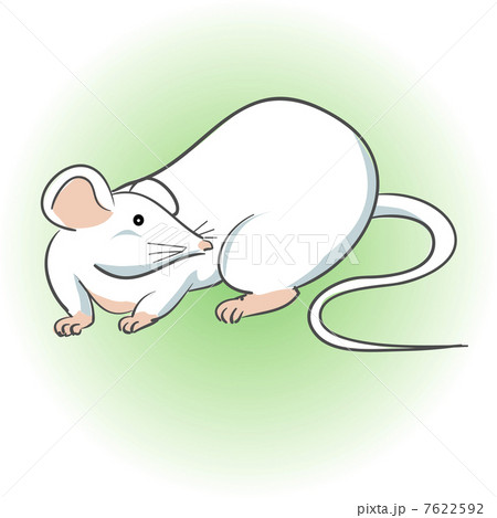 ハツカネズミの画像 p1_16