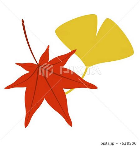 イチョウの画像 p1_19