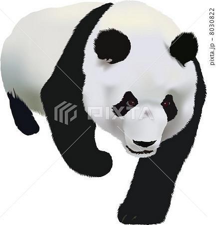 ジャイアントパンダの画像 p1_17