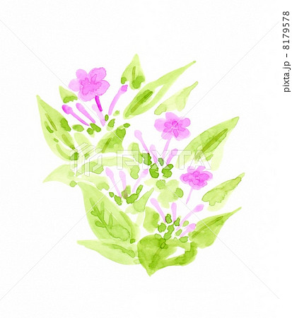 オシロイバナの画像 p1_19