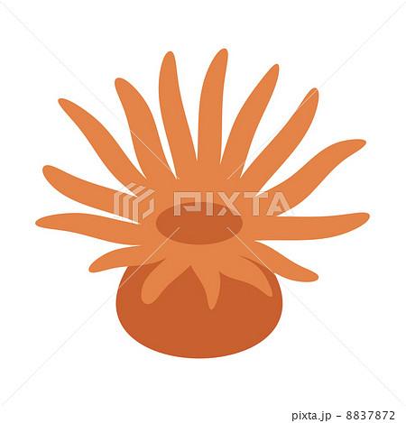 イソギンチャクの画像 p1_25