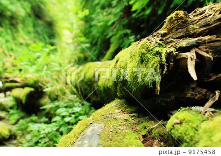 レッドウッド国立公園の画像 p1_29