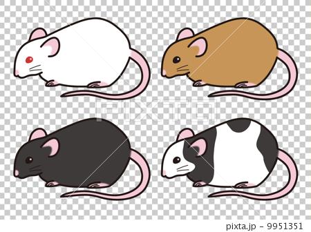 ハツカネズミの画像 p1_26