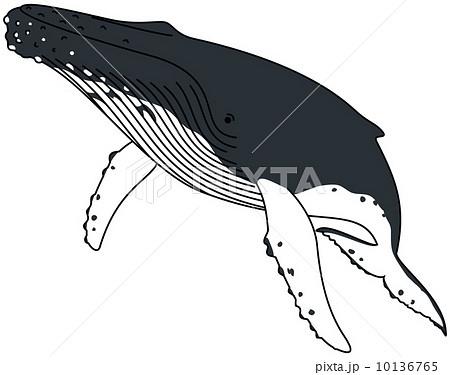 ザトウクジラの画像 p1_6