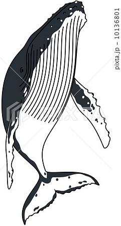 ザトウクジラの画像 p1_24