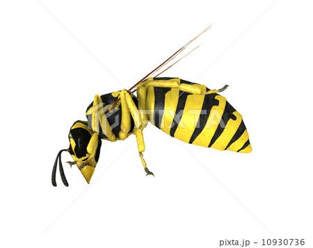 スズメバチの画像 p1_16