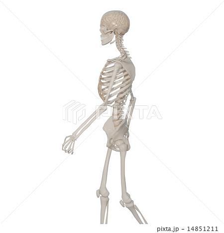 骸骨の画像 p1_17
