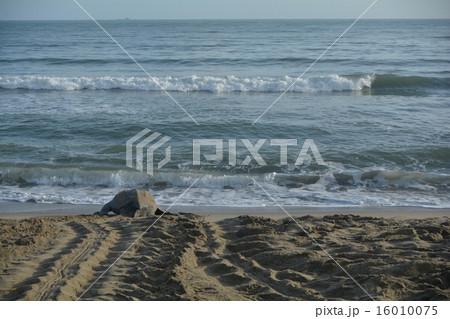 オサガメの画像 p1_33