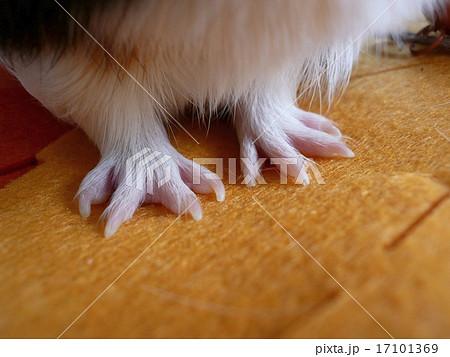 天竺鼠の画像 p1_4