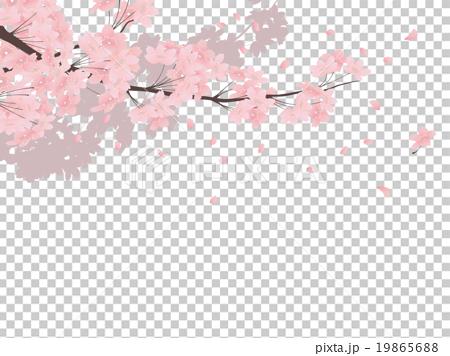 ソメイヨシノの画像 p1_10