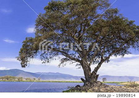 ンゴロンゴロ保全地域の画像 p1_30