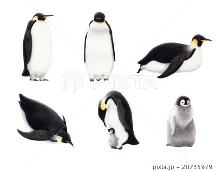コウテイペンギンの画像 p1_31