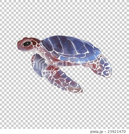 ウミガメの画像 p1_16