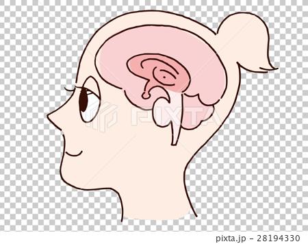 插图 脸部_身体 脸部,脸部部分 大脑 外形 侧脸 轮廓  *pixta限定素材