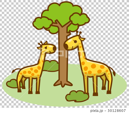 图库插图: 长颈鹿 矢量 全身