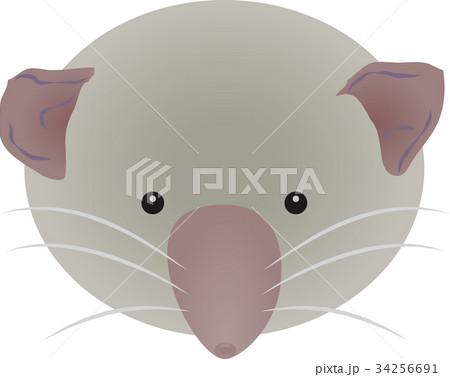ジャコウネズミの画像 p1_21