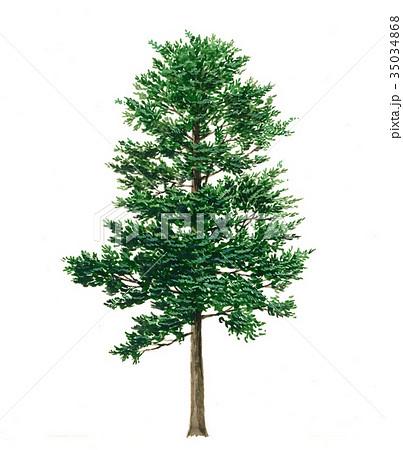サワラ (植物)の画像 p1_6