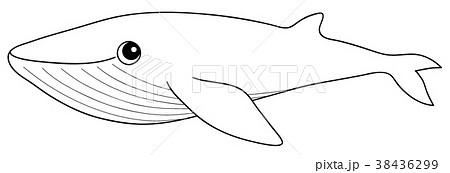 シロナガスクジラの画像 p1_37