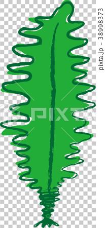 图库插图: 矢量 裙带菜(海藻) 发芽